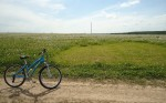 Nature___Fields_Biking_on_the_edge_of_blossoming_field_103240_.jpg